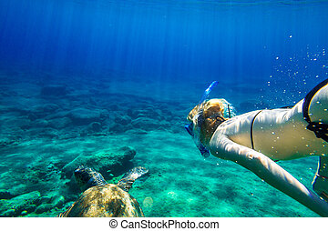 Sea turtle - A young woman snorkeler swims with sea turtle...