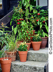 Container garden vegetables plants in pot. - Ornamental...
