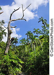 Cuban vegetation at escambray sierra - View of cuban...
