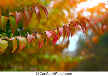 colorful leaves. Autumn Colors. Colorful background