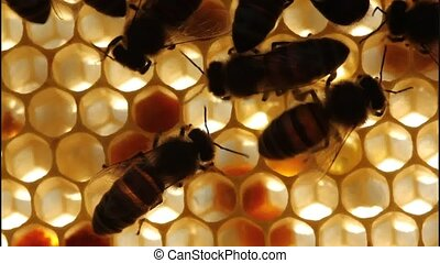 Work bees in hive - Bees convert nectar into honey and...