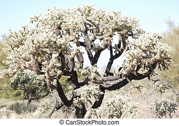 Arizona Desert Cactus Tree