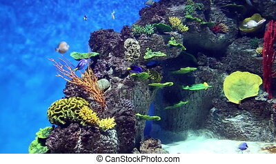 Fish tank with colorful fish, living corals and beautiful...