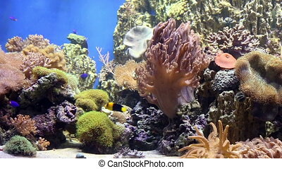 Fish tank  with colorful fish, living corals