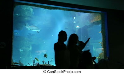 People stand in Moskvarium biggest oceanarium in Russia -...