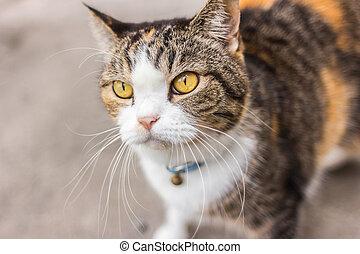 smart look yellow-eyed cat lying