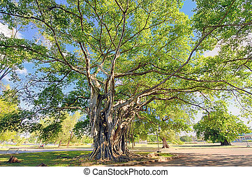 Big tree with lush foliage - A view of big tree with green...