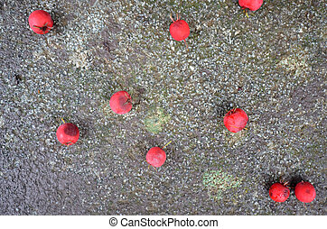 red Hawthorne Berry - Picture of a red Hawthorne Berry on a...