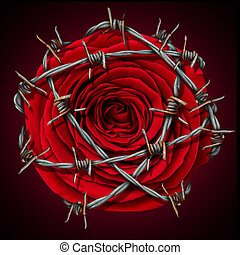 Forbidden Love - Forbidden love concept as a red rose...