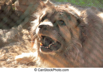 Dog in kennel - Dog muzzle caucasian shepherd closeup