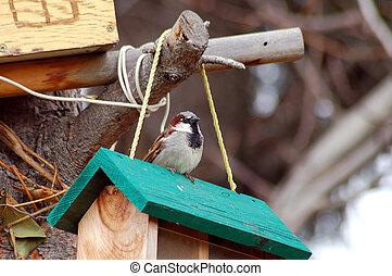 Sparrow on birdfeeder - Little sparrow sitting on birdfeeder