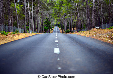 Road in middle of forest
