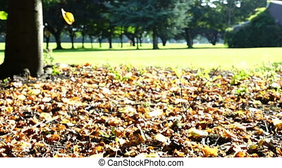 leaves falling in slow motion