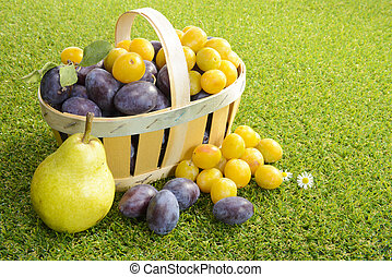 basket of plums on grass