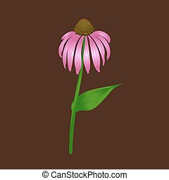 Echinacea purpurea on a brown background
