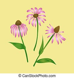 Echinacea purpurea on a yellow background