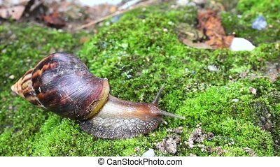 snail crawling on soil