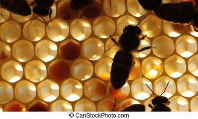Building instinct bees. - Cell measurements corresponds to...