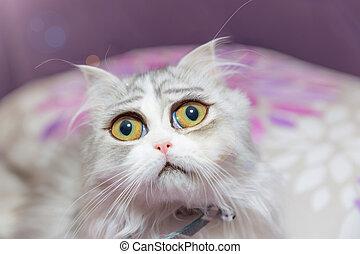 triste, gatito, con, inmenso, ojos,