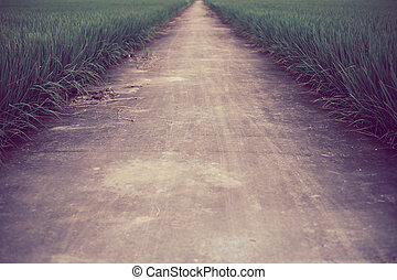 The way in farm rice field