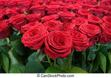 grand, tas, rouges, roses