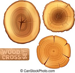 Wood Cross Section Set - Wood logs cross section set with...