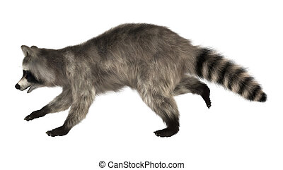Raccoon - 3D digital render of a raccoon running iisolated...