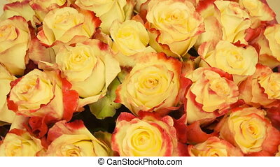 Close up of tan roses.