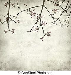 textured old paper background with Ceiba speciosa, silk...