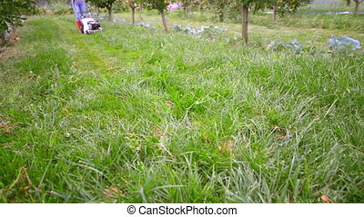 Lawn Mower - Person using lawn mower in a orchard