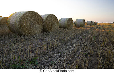 Straw bales - harvested field with straw bales in summer