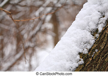 snowbank on tree trunk