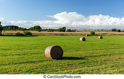 haystacks or hay rolls on summer field - agriculture,...