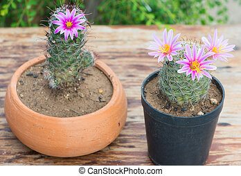 Cactus With Pink Flower in flower pot