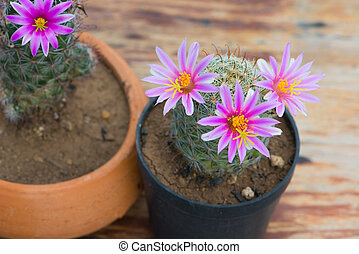 Cactus in flower pot on wood table and