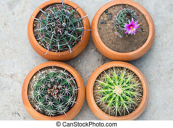 Cactus With Pink Flower in flower pot - Cactus in flower pot