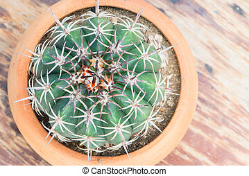 Top view of cactus in flower pot on wood table