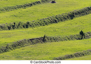 textural green fields with human made terraces