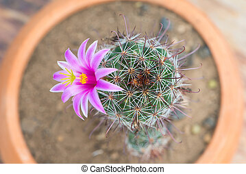 Closed up Cactus With Pink Flower - Cactus in flower pot