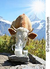 Cows in Alpine meadow Jungfrau region, Switzerland