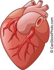 Human heart cartoon illustration - Vector Illustration Of...