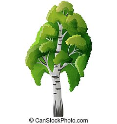 Birch tree isolated