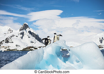 Adelie Penguins on the ice in Antarctica