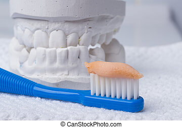 toothbrush with paste and dental gypsum - Oral hygiene...