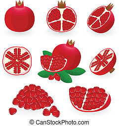 Pomegranate - Vector illustration of pomegranate