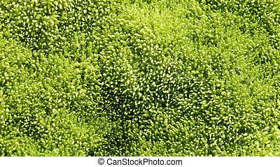 Wet moss texture