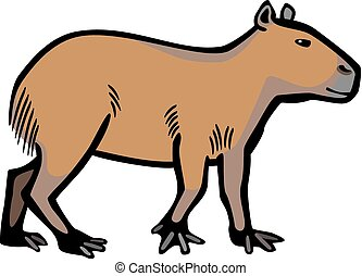 Capybara - color illustration of the largest rodent, a...