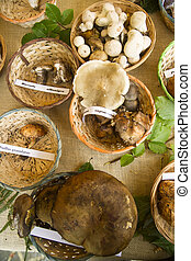Mixed mushrooms - Exhibition of mixed mushrooms freshly...