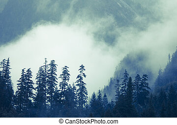 Mountains and Fog - Low fog in the coastal mountains of...