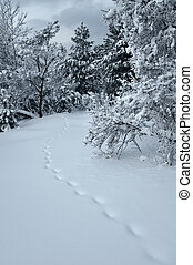 Fairy path - Animas traces on a snow